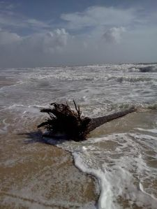 tree in surf